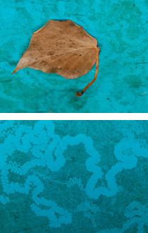 arbre singulier détail