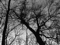 remi_caritey-arbre-singulier_jumeau-t2