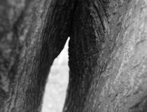 remi_caritey-arbre-singulier_voyageur-t2