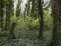 Une forêt hors du champ